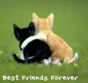 BFF - kittens